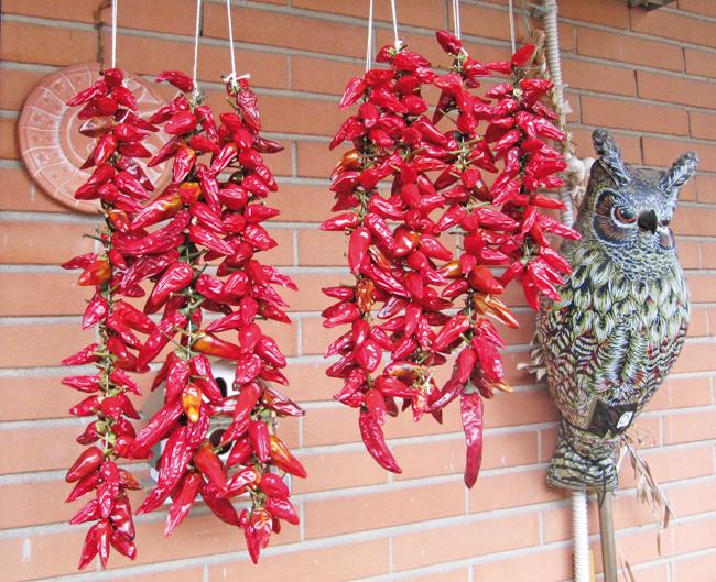Capsicum che pianta ilfloricultore for Bacche rosse nomi