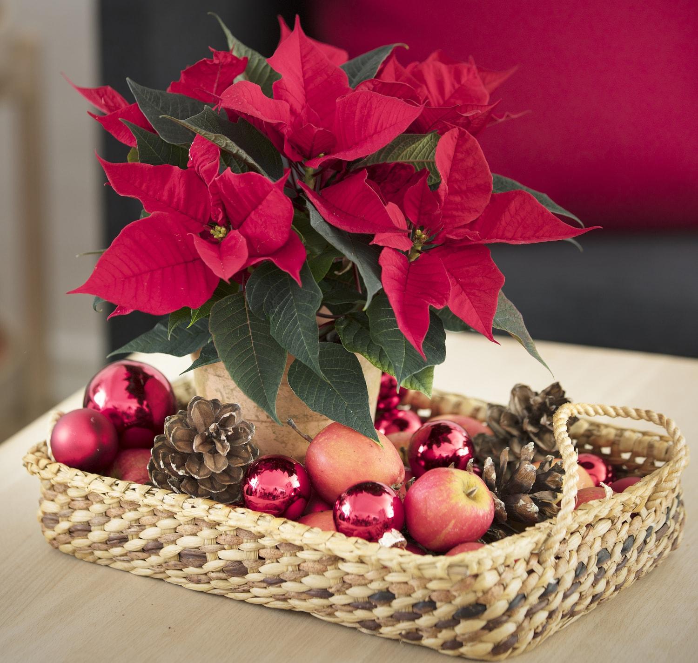 Stelle Di Natale Da Costruire un natale di stelle: 10 idee decorative di tendenza