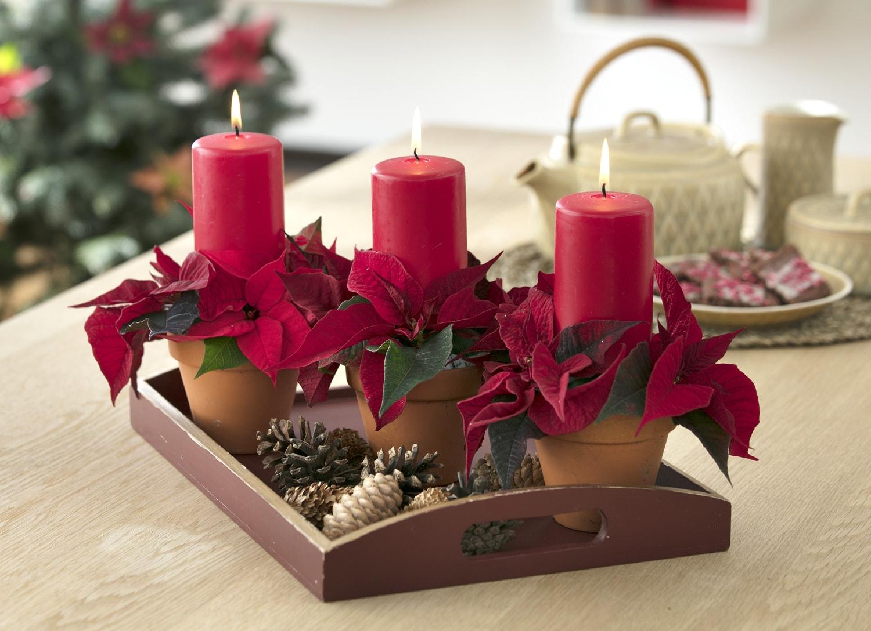 Creare Composizioni Per Natale un natale di stelle: 10 idee decorative di tendenza