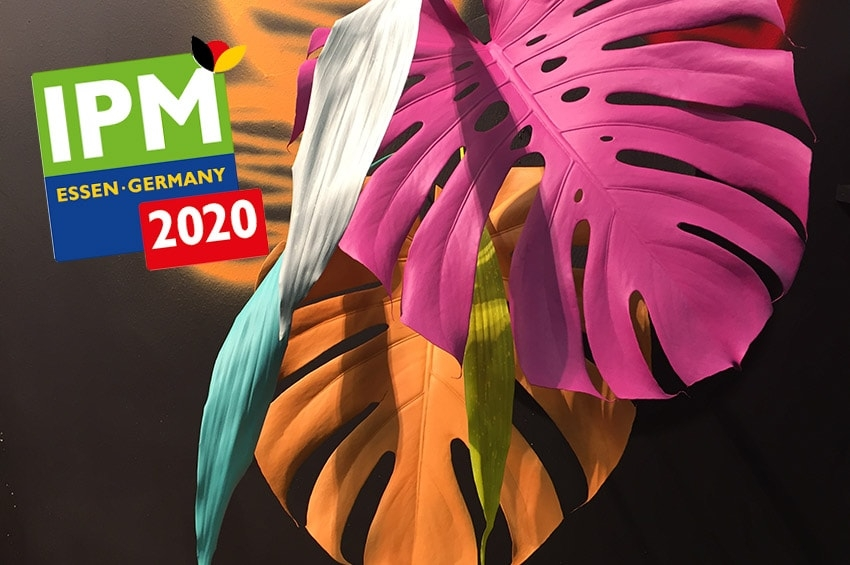 IPM ESSEN 2020 FLOWER DESIGN photo gallery