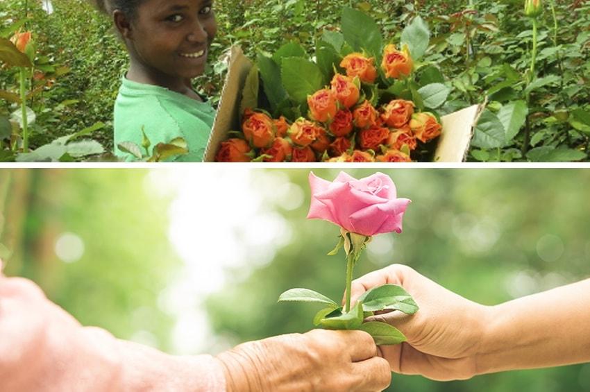Floricoltura sostenibile, si può, si deve, si fa