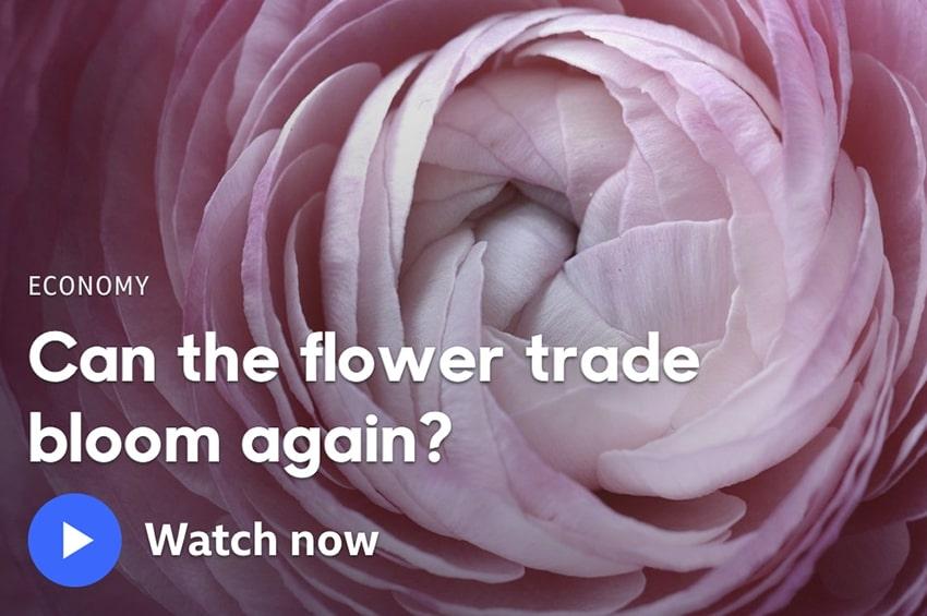 In un documentario della BBC il futuro del mercato dei fiori recisi