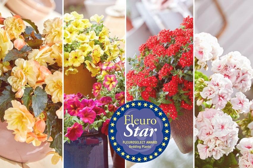 """FleuroStar 2021: il 29 giugno la premiazione livestream della pianta con il fattore """"WOW"""""""