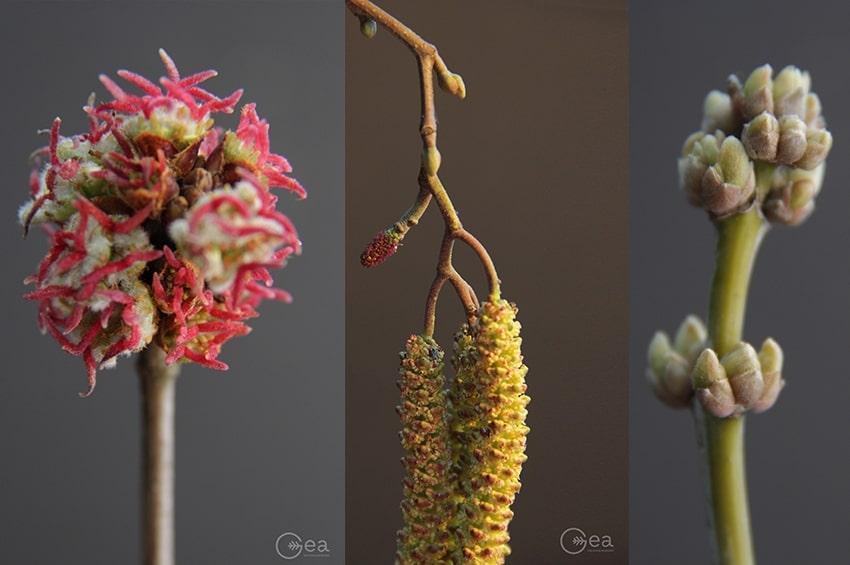 Primavera: una gemma al giorno leva il malumore di torno