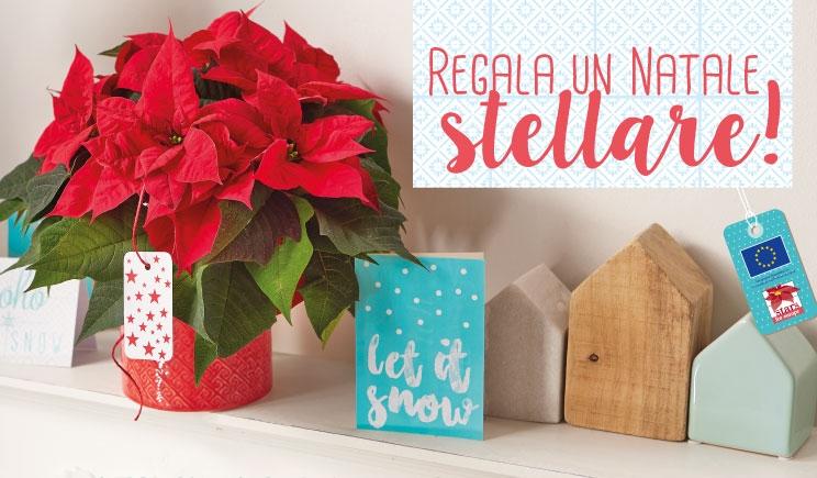 Stelle di Natale, la stagione è alle porte: idee e materiali per spingere le vendite