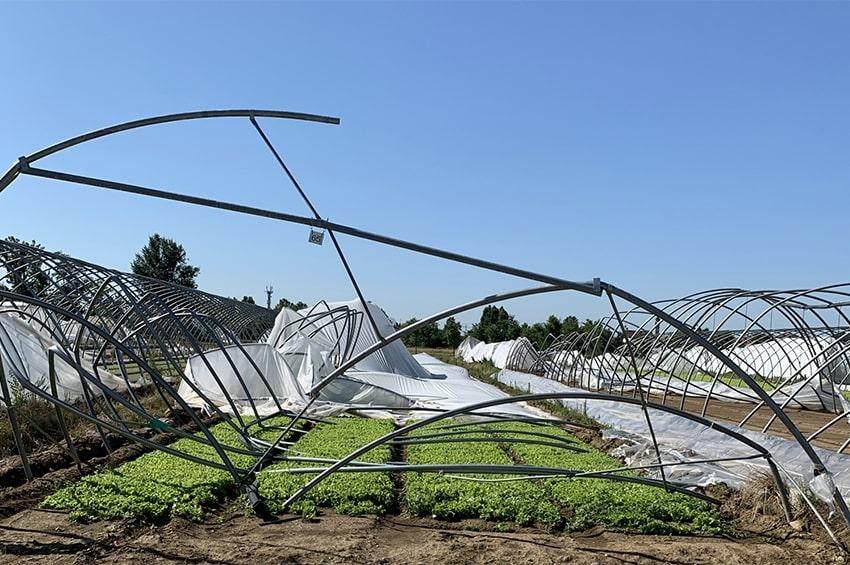 Il maltempo nella Bergamasca provoca danni al settore orticolo per oltre un milione di Euro