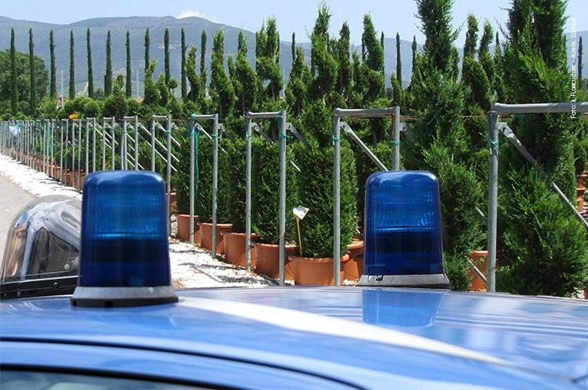 350mila piante rubate nei vivai pistoiesi durante il 2019
