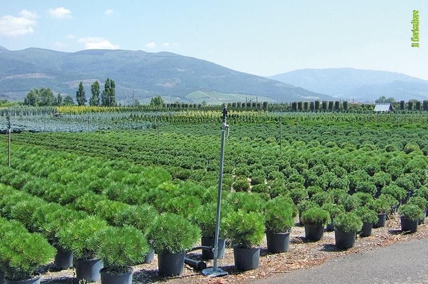Banca delle Terre: in vendita oltre 16mila ettari. Il bando di Ismea per i giovani agricoltori