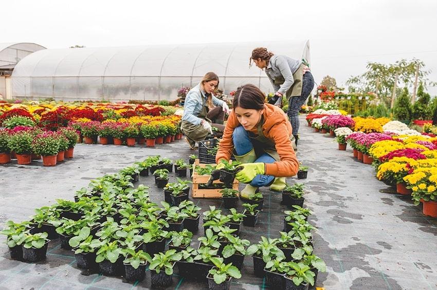 """""""Più impresa"""" e """"Donne in Campo"""", incentivi e agevolazioni per favorire l'imprenditoria giovanile e femminile in agricoltura"""