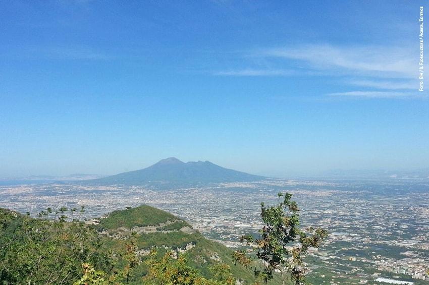 Coronavirus, Campania: dalla Regione 10 milioni di Euro per il florovivaismo