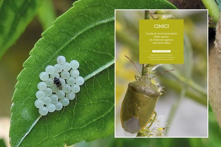 Pubblicata la Guida per riconoscere le specie di CIMICI di interesse agrario nel Nord Italia
