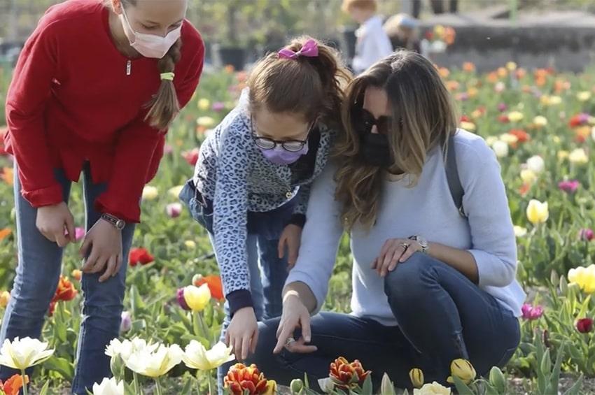 Garden center: a Bussolegno esplode la tulipomania self-service