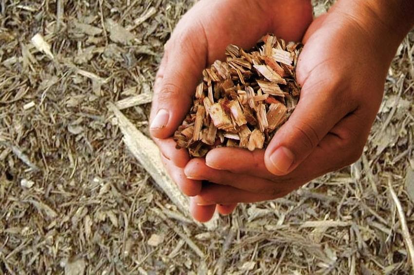 A EIMA Energy protagoniste le biomasse