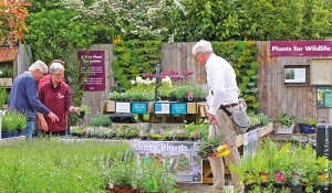 UK, continuano a fiorire le vendite nei garden center